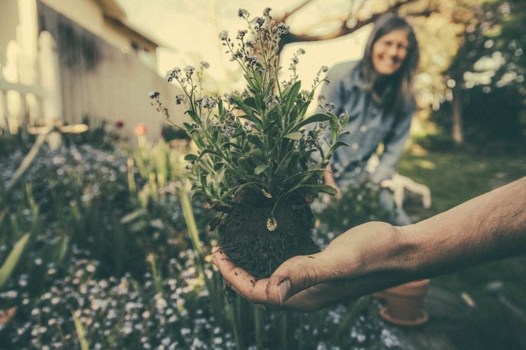 Homemade garden weed killers